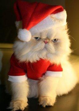 funny-christmas-cat
